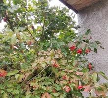 Дача с хорошим садом - Дачи в Крыму