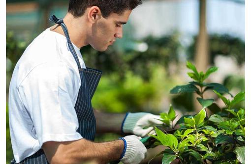 На постоянную работу в загородный дом Алушты требуется садовник-озеленитель - Работа на дому в Алуште