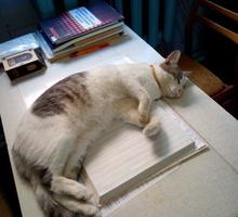 Пропала домашняя   кошка   в  районе  Фиолентовского шоссе 11августа - Кошки в Севастополе