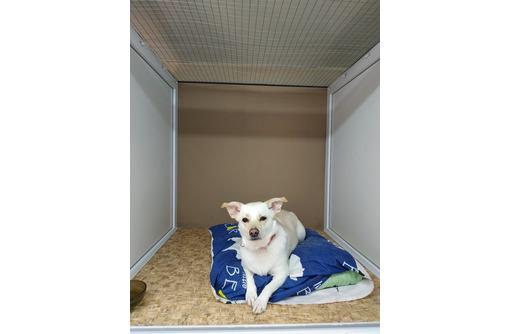 Зоогостиница для собак и кошек в Севастополе – индивидуальный подход к каждму животному! - Дрессировка, передержка в Севастополе