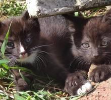 Милые котята 1 МЕСЯЦ - Кошки в Крыму