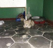 Отдам в добрые руки котенка. - Кошки в Крыму