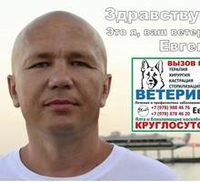 Ветеринарная помощь на дом. Круглосуточно. Ялта. - Ветеринарные услуги в Крыму