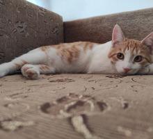 Котик в добрые руки - Кошки в Севастополе
