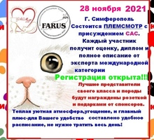 Выставка кошек в Симферополе - Выставки, мероприятия в Симферополе