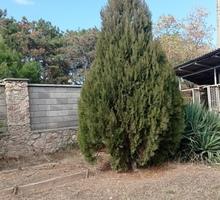 Продам деревья - Саженцы, растения в Севастополе