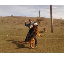 Дрессировка собак любых пород - Дрессировка, передержка в Симферополе