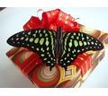 Тропические бабочки - живая валентинка в день всех влюбленных - Свадьбы, торжества в Крыму