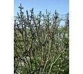 Квалифицированная обрезка плодовых деревьев - Сельхоз услуги в Севастополе