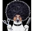 Стрижка собак и кошек на дому - Груминг-стрижки в Севастополе