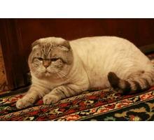 Предлагаются коты для вязки просто классные!!!!!!!!!!!! - Вязка в Севастополе