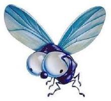 Дезинсекция. Уничтожение мух быстро и качественно - Клининговые услуги в Краснодаре