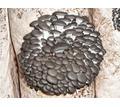 Комплект для выращивания грибов вешенка в любых домашних условиях - Грибоводство в Сочи