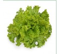Семена салата KS 129фирмы Китано - Саженцы, растения в Краснодаре