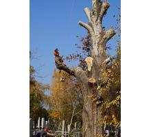 Спилить дерево Краснодар. - Ландшафтный дизайн в Краснодарском Крае