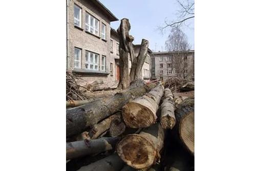 Пилим деревья  сложные и очень сложные расчистка планировка участка, фото — «Реклама Армавира»