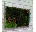 Вечно живые, цветы, растения, картины из экзотических растений - Дизайн интерьеров в Краснодарском Крае