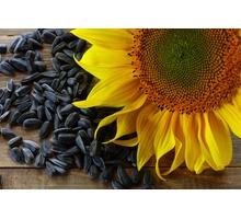 Семена гибридного подсолнечника Анюта, Махаон, Дая и др. - Саженцы, растения в Краснодаре