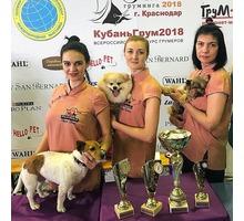 Профессиональные стрижки собак и кошек в Новороссийске. - Груминг-стрижки в Новороссийске