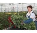Работник Евротеплицы - Сельское хозяйство, агробизнес в Тихорецке