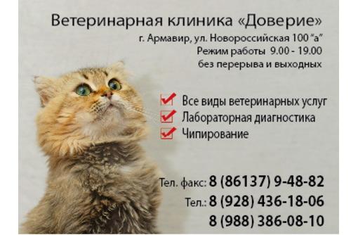 Ветеринарная клиника Доверие, фото — «Реклама Армавира»