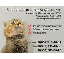 Ветеринарная клиника Доверие - Ветеринарные услуги в Армавире