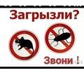 Уничтожение насекомых в Анапе - Клининговые услуги в Анапе