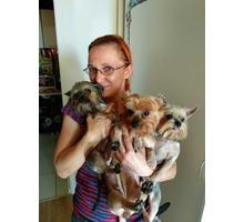 Стрижка собак и кошек с выездом в любой район г. Сочи - Груминг-стрижки в Сочи