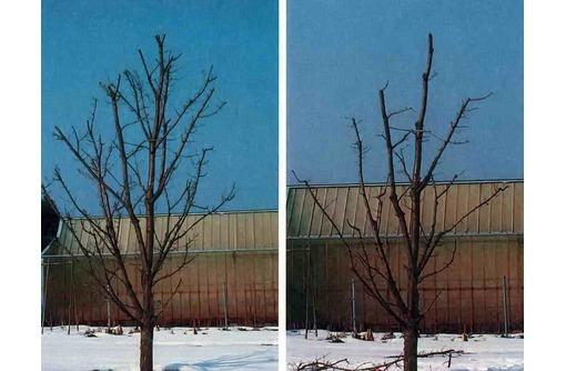 Резчик - плодовых деревьев и кустарников. - Сельское хозяйство, агробизнес в Геленджике