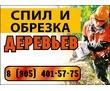 Спил и обрезка деревьев, фото — «Реклама Армавира»