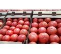 Продаем помидоры оптом в краснодарском крае, помидор оптом краснодарский - Эко-продукты, фрукты, овощи в Краснодаре