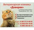 """Ветеринарная клиника """"Доверие"""" - Ветеринарные услуги в Армавире"""