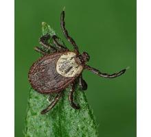 Обработка участков от клещей, муравьёв, ос, блох, тли. - Средства защиты в Краснодаре