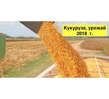 Кукуруза товарная 200 т., урожай 2018 г. - Сельхоз услуги в Краснодарском Крае