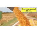 Кукуруза товарная 200 т., урожай 2018 г. - Сельхоз услуги в Тихорецке