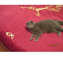 Отдам кошечку в хорошие руки - Кошки в Краснодарском Крае