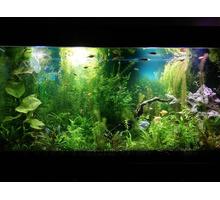 Дизайн аквариума для всех - Аквариумные рыбки в Краснодарском Крае