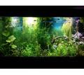 Дизайн аквариума для всех - Аквариумные рыбки в Краснодаре