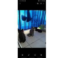 Отдам в добрые руки котят - Кошки в Адлере
