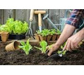Требуется Садовник - Сельское хозяйство, агробизнес в Белореченске