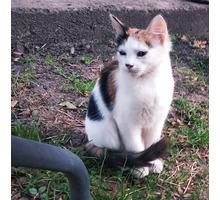 Отдам в добрые руки кошечку - Кошки в Краснодарском Крае