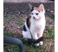Отдам в добрые руки кошечку - Кошки в Краснодаре