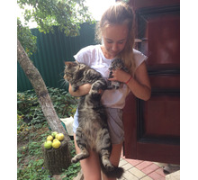 Отдадим милых и игривых котят. - Кошки в Краснодарском Крае