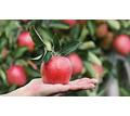 Требуются сотрудники в бригаду на сбор яблок - Сельхоз услуги в Тимашевске
