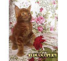 Котята мейн кун - уникального красного окраса. Шоу класс. Питомник - Кошки в Краснодарском Крае