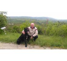 ПРОДАМ  щенки  КАНЕ-КОРСО - Собаки в Краснодарском Крае