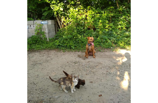 Дрессировка собак всех пород постановка на охрану - Дрессировка, передержка в Лабинске