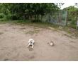 Дрессировка собак всех пород постановка на охрану, фото — «Реклама Горячего Ключа»
