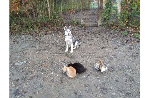 Дрессировка собак всех пород постановка на охрану - Дрессировка, передержка в Горячем Ключе