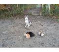 Начальный курс дрессировки собак - Дрессировка, передержка в Краснодарском Крае